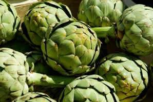 Cultivo de la alcachofa: Cómo plantar alcachofas