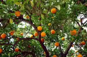 Los Frutos y sus agentes de crecimiento