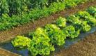 Acolchoamento e Anti-ervas
