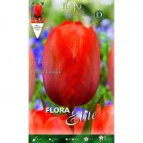 Bolbo Tulipa Darwin laranja Elite 10 unidades