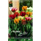 Bolbo Tulipán viridiflora mix de cores 10 ud