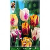 Bolbo Tulipa Rembrand mix de cores Elite 10 ud