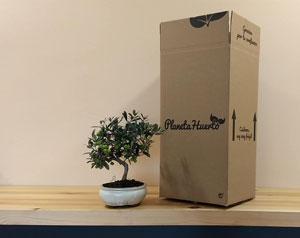 ¿Cómo me llega el bonsái a casa?